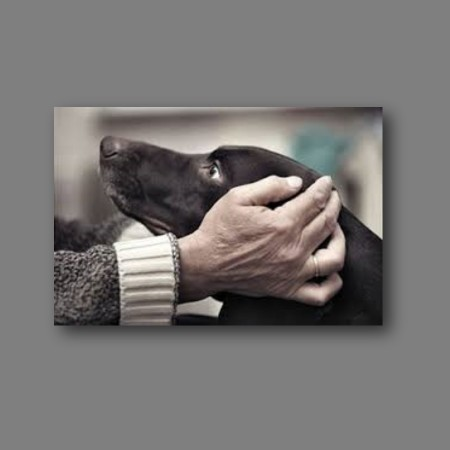dog-hands